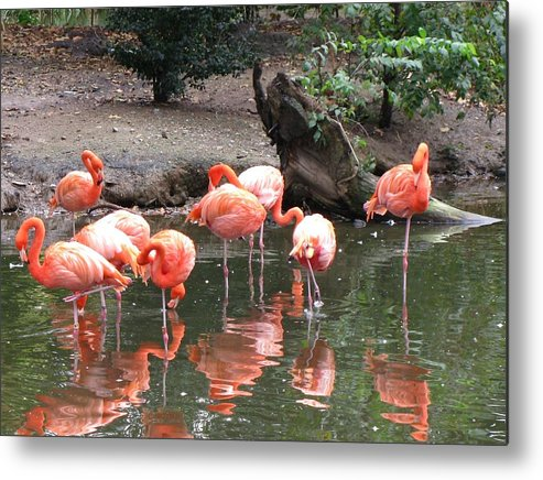 Landscape Metal Print featuring the photograph Pink Reflections by Gloria Byler