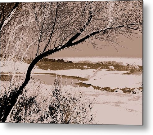 Photography Metal Print featuring the photograph Quiet Solitude by Lessandra Grimley