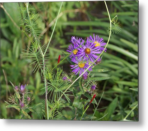 Floral Metal Print featuring the painting Shades Of Lavendar by Debbie May