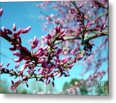 Flowers Metal Print featuring the photograph Spring Bliss by Kathy Bucari