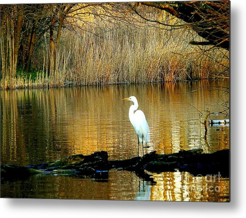 Egret Metal Print featuring the photograph Standing On Shakey Ground by Kendall Eutemey
