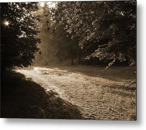 Light Metal Print featuring the photograph Step Out Of The Shadow by Daniel Csoka