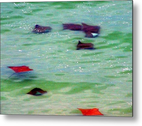 Sting Rays Metal Print featuring the digital art Sting Rays by Kenna Westerman