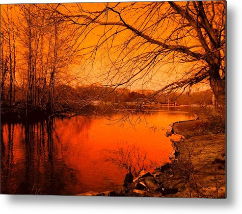 Landscape Metal Print featuring the photograph Studying The Sunset by Kendall Eutemey