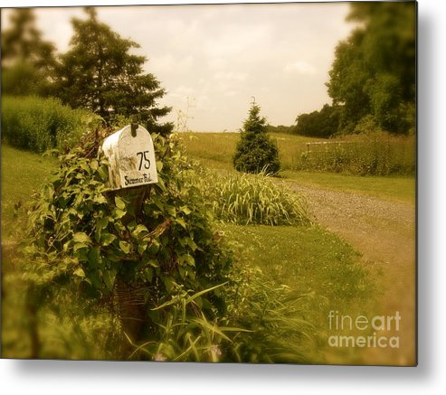 Rural Metal Print featuring the photograph Summer Road by Sergio Geraldes
