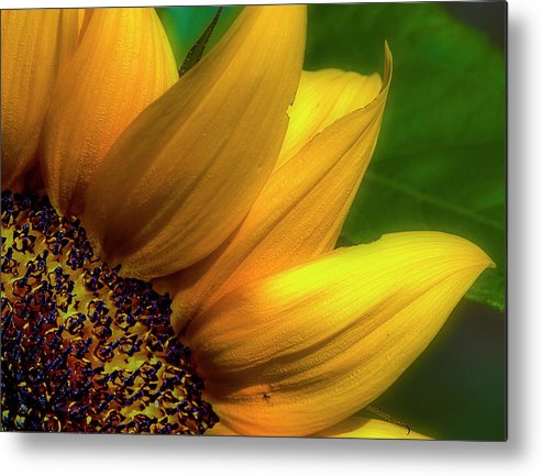 Flowers Metal Print featuring the photograph Sunflower Detail by Gary Shepard