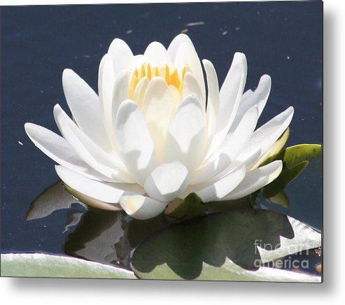 Flower Metal Print featuring the photograph Sunlight On Water Lily by Carol Groenen