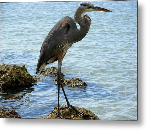 Birds Metal Print featuring the photograph The Watch Tower by Amanda Vouglas