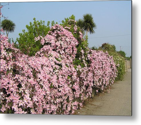 Flowers Metal Print featuring the photograph Wall Of Beauty In Ireland by Jeanette Oberholtzer