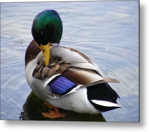 Wildlife Metal Print featuring the photograph Waters Edge by Doug Mills