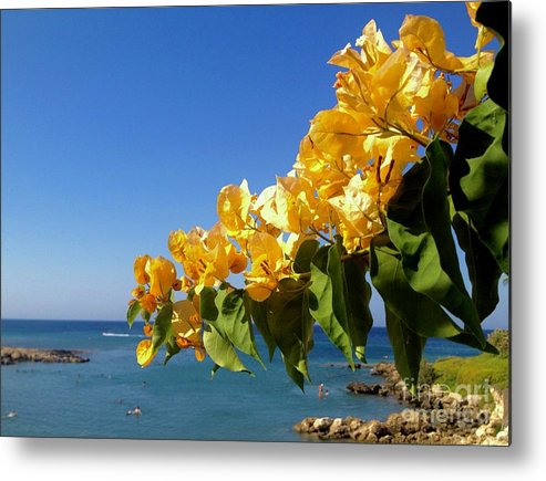 Bougainvillea Metal Print featuring the photograph Yellow Bougainvillea Over The Mediterranean On The Island Of Cyprus by Clay Cofer