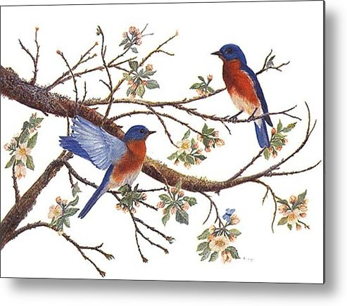 Bluebirds Metal Print featuring the painting Bluebirds And Apple Blossoms by Ben Kiger