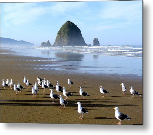 #gatheringofthegulls Metal Print featuring the photograph Gathering Of The Gulls by Will Borden