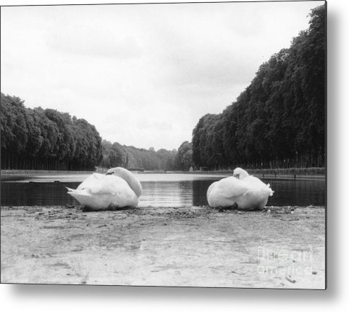 Swans Metal Print featuring the photograph Resting Swans by Christine Jepsen