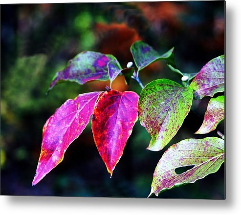Fall Metal Print featuring the photograph Fall In Shades Of Purple by Kenna Westerman