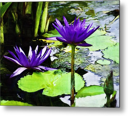 Flower Metal Print featuring the photograph Purple Water Lilies by D W Steinbarger