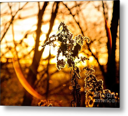 Sunset Metal Print featuring the photograph Autumn's Golden Glow by Lori Sulger
