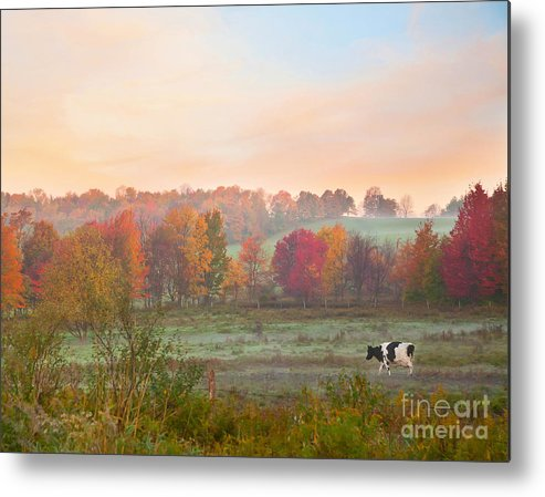 Early Morning Metal Print featuring the photograph Early Morning Pasture by Lori Sulger