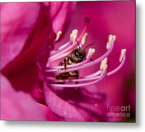 Bee Metal Print featuring the photograph I See You by Lori Sulger