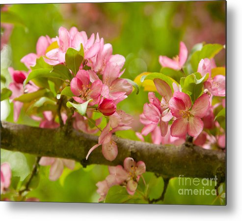 Spring Metal Print featuring the photograph Spring Blossom by Lori Sulger