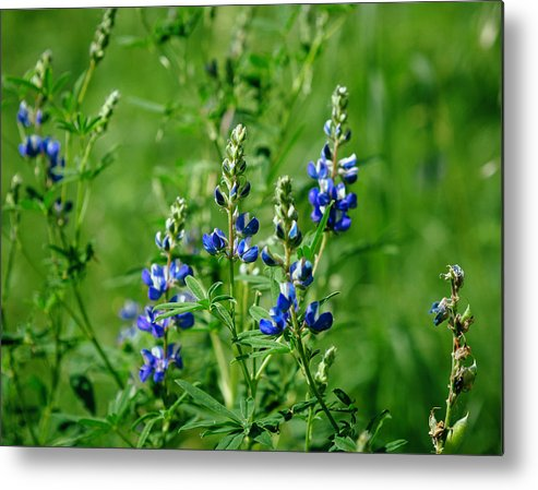 Arizona Metal Print featuring the photograph Blue by CEB Imagery