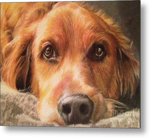 Golden Retriever Metal Print featuring the mixed media Bobby by Kelli Porter