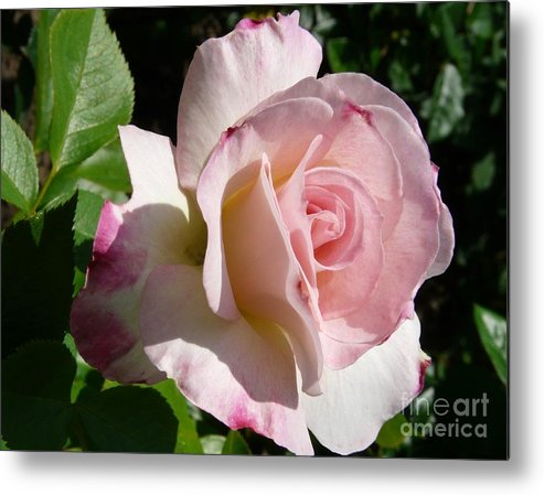 Rose Metal Print featuring the photograph Springtime Has Sprung by Kendall Eutemey
