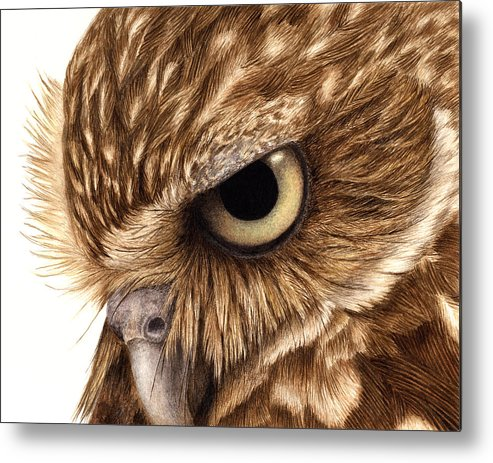 Owl. Burrowing Owl Metal Print featuring the painting Eyeful by Pat Erickson