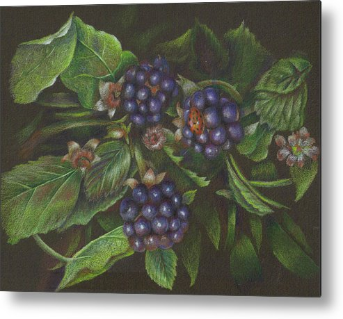 Blackberries Metal Print featuring the drawing Lady's Brunch by Mary Jo Jung
