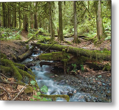Stream Metal Print featuring the photograph Rainforest At Bridal Veil Falls - British Columbia by Linda McRae