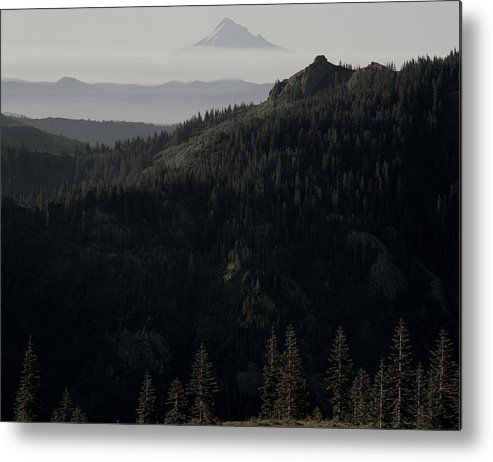 Nature Metal Print featuring the photograph Silverstar Trees by Benjamin Garvey