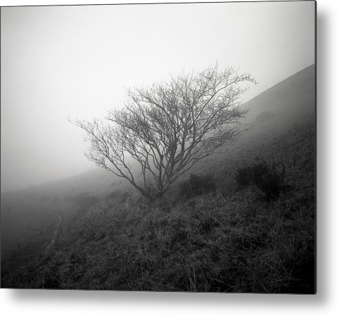 Nature Metal Print featuring the photograph Tree Mist by Benjamin Garvey