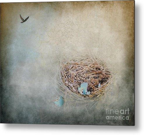 Bird Metal Print featuring the photograph Empty Nest by Jai Johnson