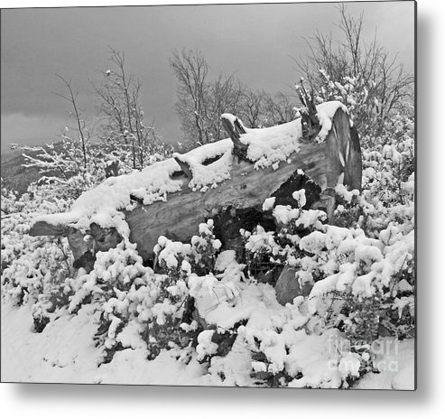Metal Print featuring the photograph Snow Covered Tree Log In Black And White by Kenny Bosak