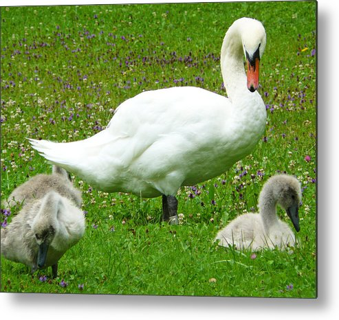 Caring Metal Print featuring the photograph A Caring Mother by Daniel Csoka