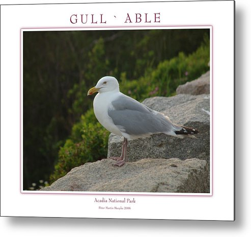 Landscape Metal Print featuring the photograph Gull Able by Peter Muzyka