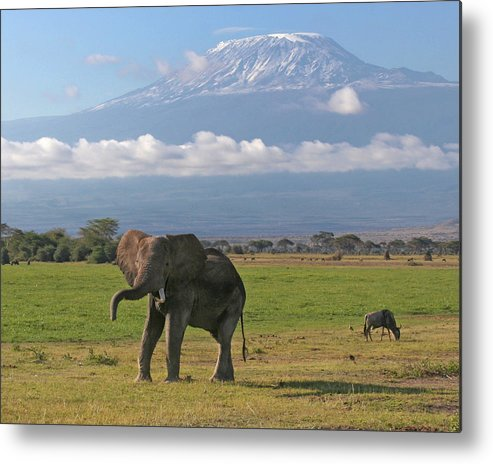 Africa Metal Print featuring the photograph In Plain Sight by Scott and Rebecca Rothney