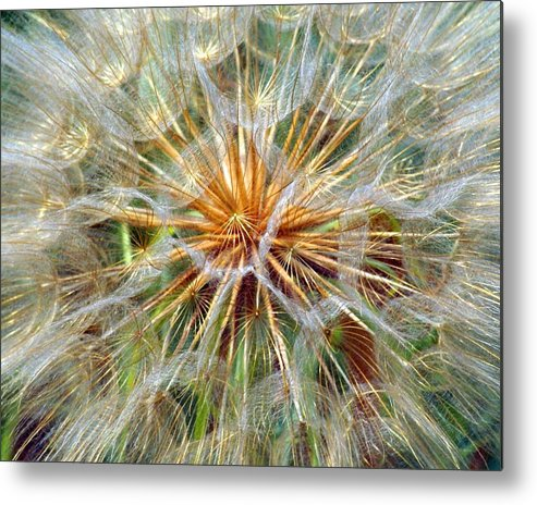 Wildflower Metal Print featuring the photograph Seeds by Marty Koch