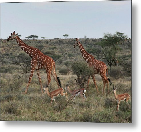 Nature Metal Print featuring the photograph Size Matters by Scott and Rebecca Rothney