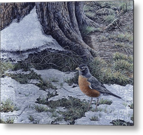Robin Metal Print featuring the painting Spring Thaw - American Robin by Craig Carlson