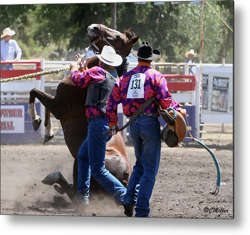 Rodeo Metal Print featuring the photograph Team Bronc Riding 2008 by Carol Miller