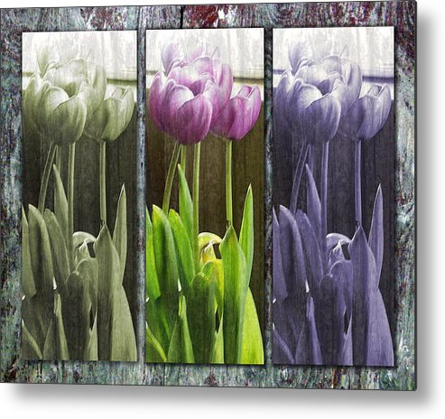 Tulips Metal Print featuring the photograph Threelips by Tom Romeo