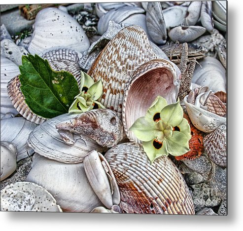 Seashells Seashore Tropical Beach Shells Metal Print featuring the photograph Collections by Carolyn Staut