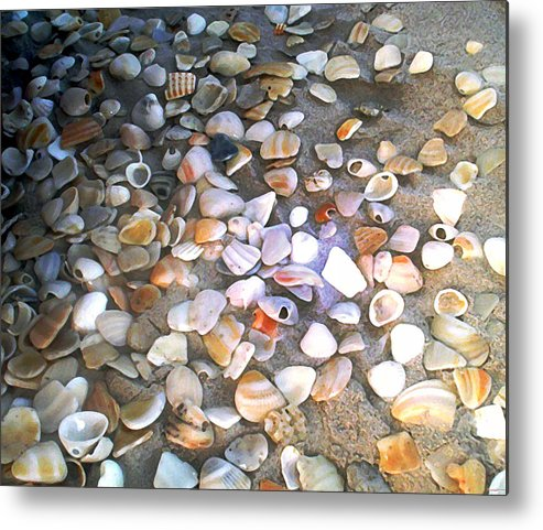 Photography Metal Print featuring the painting Sea Shells by Evelyn Patrick