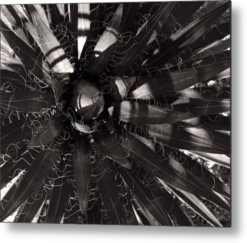Agave Metal Print featuring the photograph Agave by Steve Bisgrove