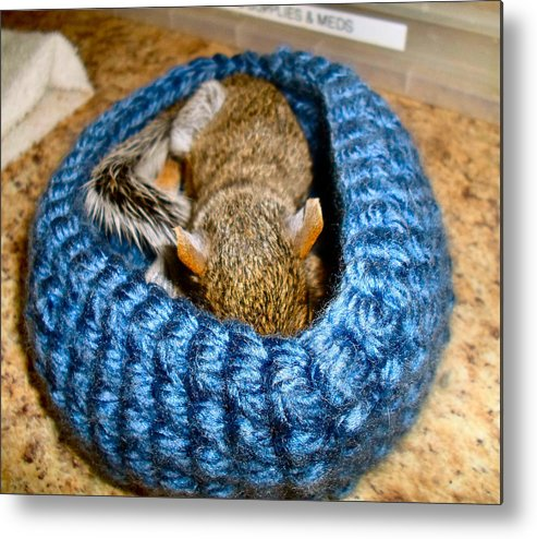 Squirrel Metal Print featuring the photograph Sleepy Time by Art Dingo