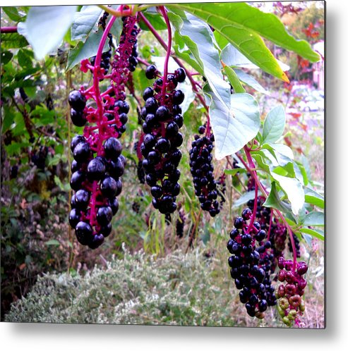 Berry Metal Print featuring the glass art Wild Berry by George Griffiths