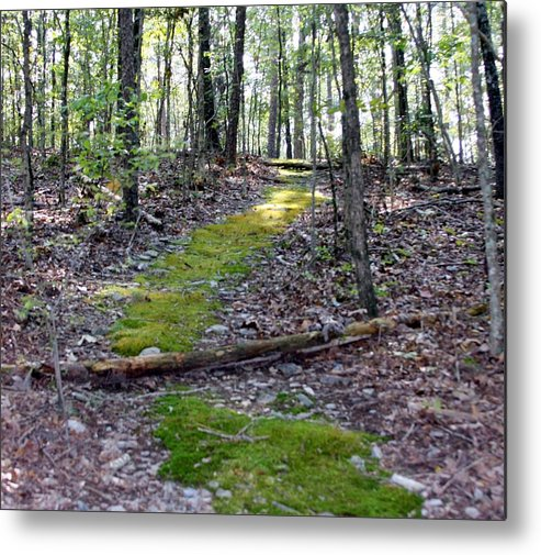 Woods Metal Print featuring the photograph Mossy Trail by Kenna Westerman