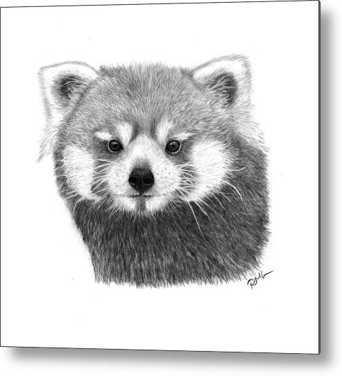 Red Panda Drawings Metal Print featuring the drawing Red Panda by Rosanna Maria