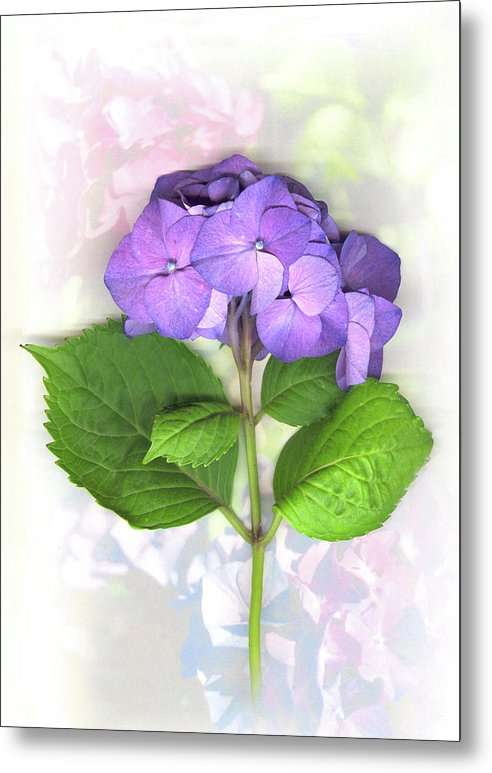 Purple Metal Print featuring the mixed media Purple Hydrangea by Sandi F Hutchins